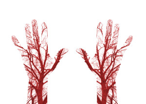 52935898 - close up human blood vessels in male hand